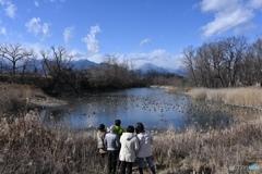 白鳥のいない湖(のような川の淀み)@梓川