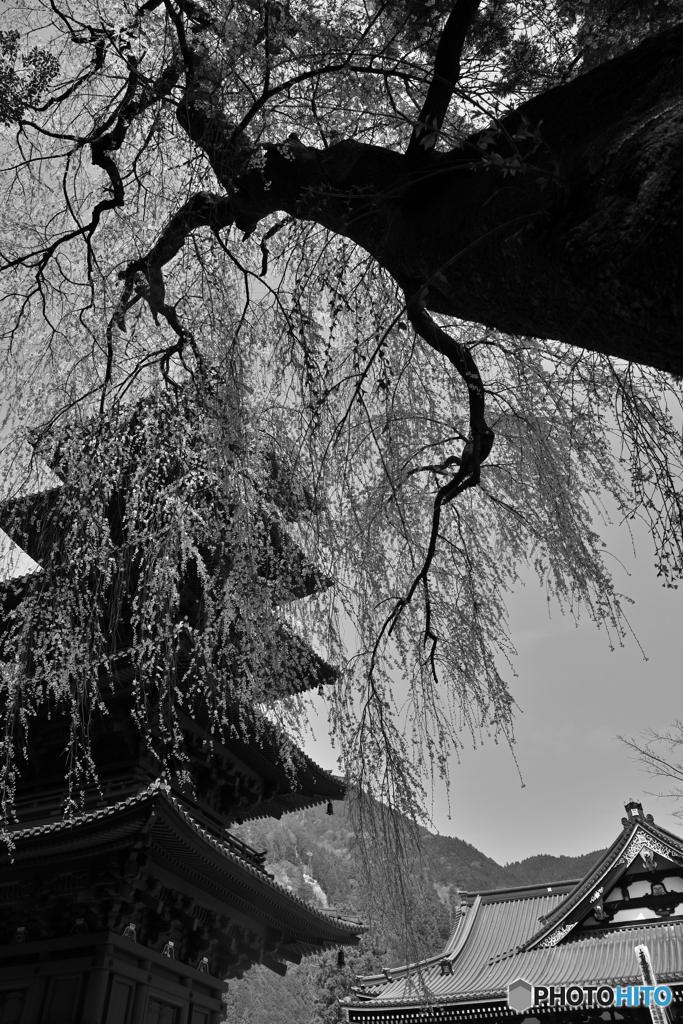 身延山久遠寺 2021