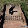5559 黒猫