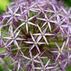 Flower trip   fig.6
