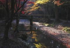 紅葉風景 #5