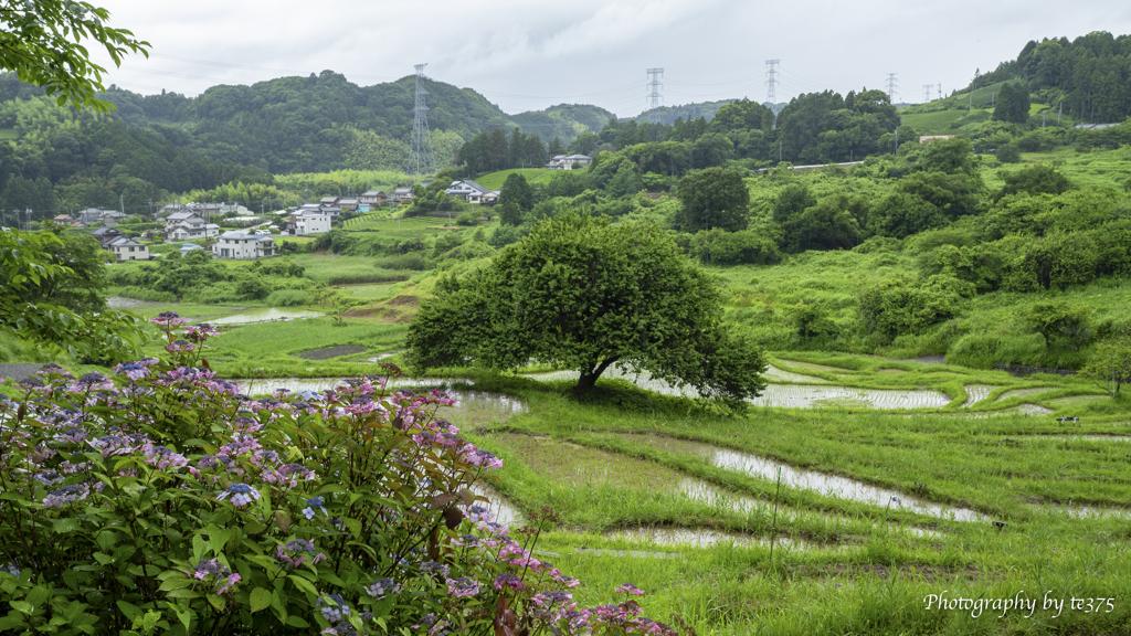 棚田風景 2021.6.19 #3