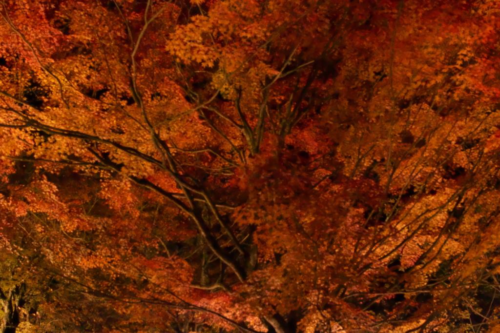 郡上八幡城の紅葉