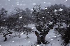 厳冬の枝垂れ栗