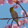 桜の季節がやって来た〜