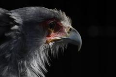蛇喰い鷲の休日
