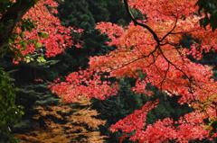 艶やかな奥多摩の秋
