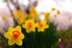 もう一つの春のコラボ
