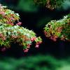 奥多摩に咲く花