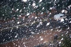吹雪の銀杏並木+α