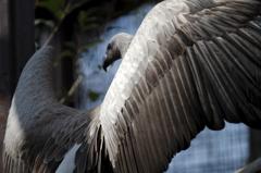 禿鷲の装い