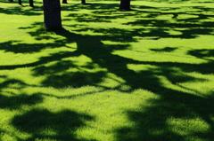 木陰の絨毯