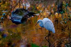 晩秋と白鷺 Ⅵ