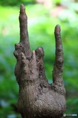 木霊の手 Ⅰ