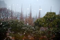 吹雪の銀杏並木-緊急UP