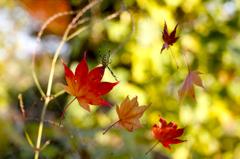 捕食された秋