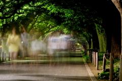 外苑銀杏並木の幻影