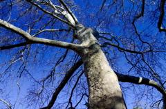 空に根を張る