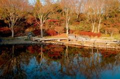 山茶花の池