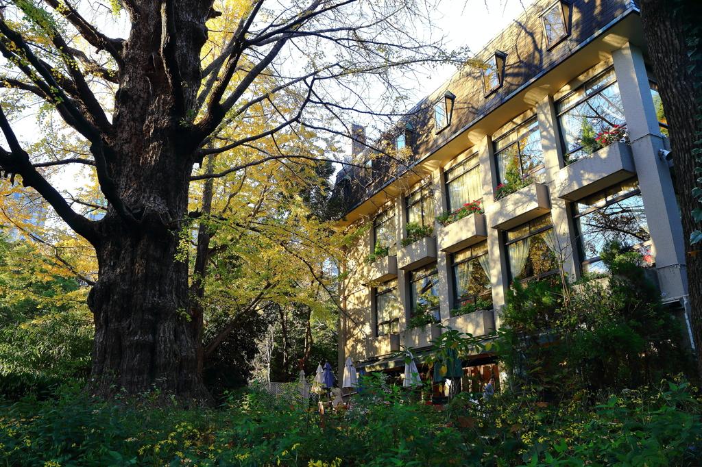 松本楼の秋