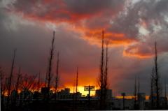 銀杏並木の終陽