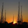 なごり深き、青山二丁目の夕陽