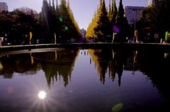 銀杏並木と噴水池