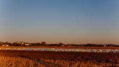 本埜-夕陽を受けた白鳥の里