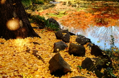秋色のスポットライト