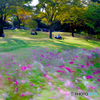 こもれびの丘-Monet tactile