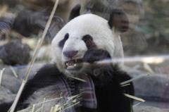 パンダ怖い