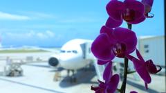 胡蝶蘭と那覇の青い空