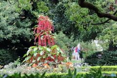 紅紐の木 Ⅱ