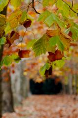 プラタナスの葉陰から