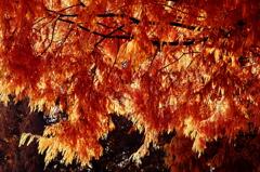 化石樹の紅葉 Ⅱ