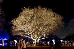 聖夜の樹の下で