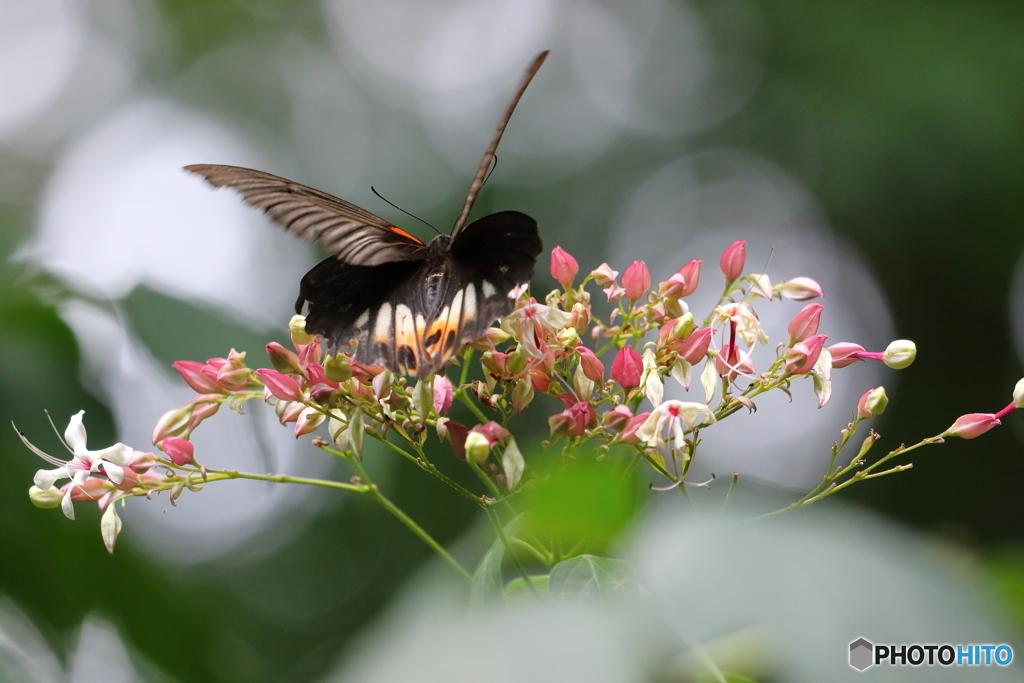 花と蝶 Ⅱ