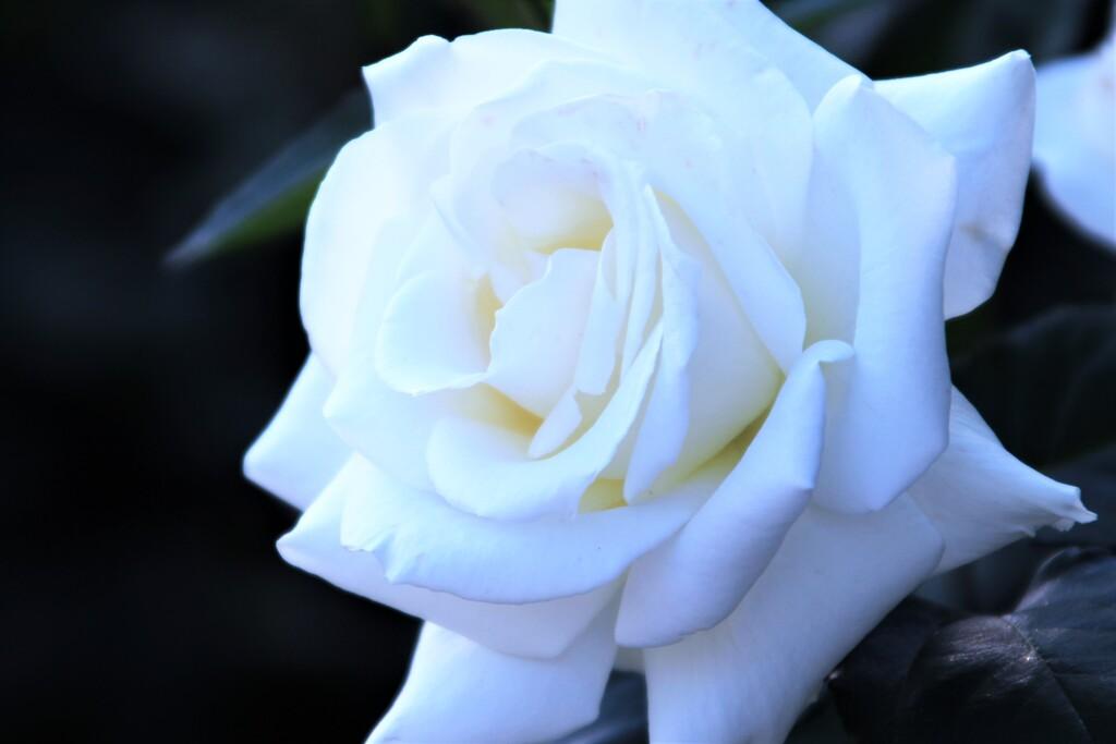 ♥Glitter of roses♥