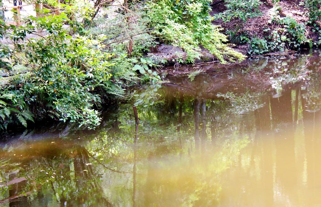 神秘な亀池