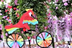 Parakeet cycling