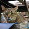 猫 Cat Green Eye DSC_0609