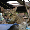 猫 Cat DSC_0608