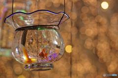 イルミネーション金魚鉢