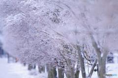 さよなら冬