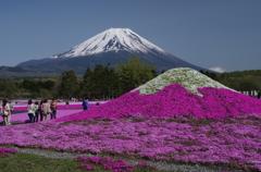 富士 芝桜まつり