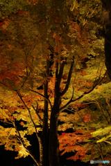 山中湖 夕焼けの渚 紅葉まつり2016
