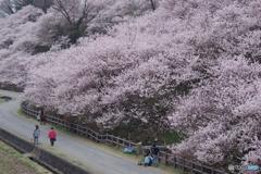 春めき小径