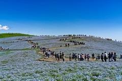 フィネモラの丘-2