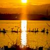 日の出・白鳥の里