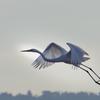 北浦の鳥たち-3